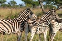 south africa overland tours